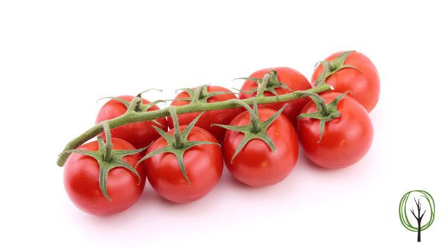 8 Tomaten am Strauch baumfrei