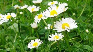 Blumen auf der Wiese baumfrei