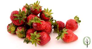 Mandelmilch selber machen-baumfrei.de- Zutat Erdbeere