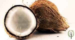 DIY Zahnpaste selber machen - baumfrei.de - Kokosnuss