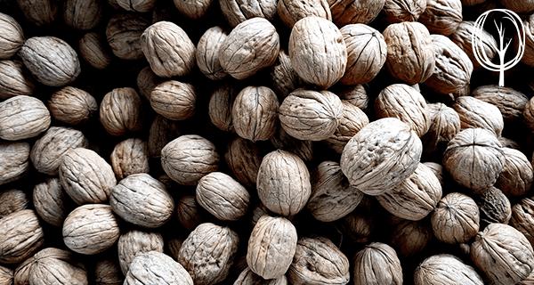 Nüsse einweichen - baumfrei.de - Pia Brouwers - AB 1
