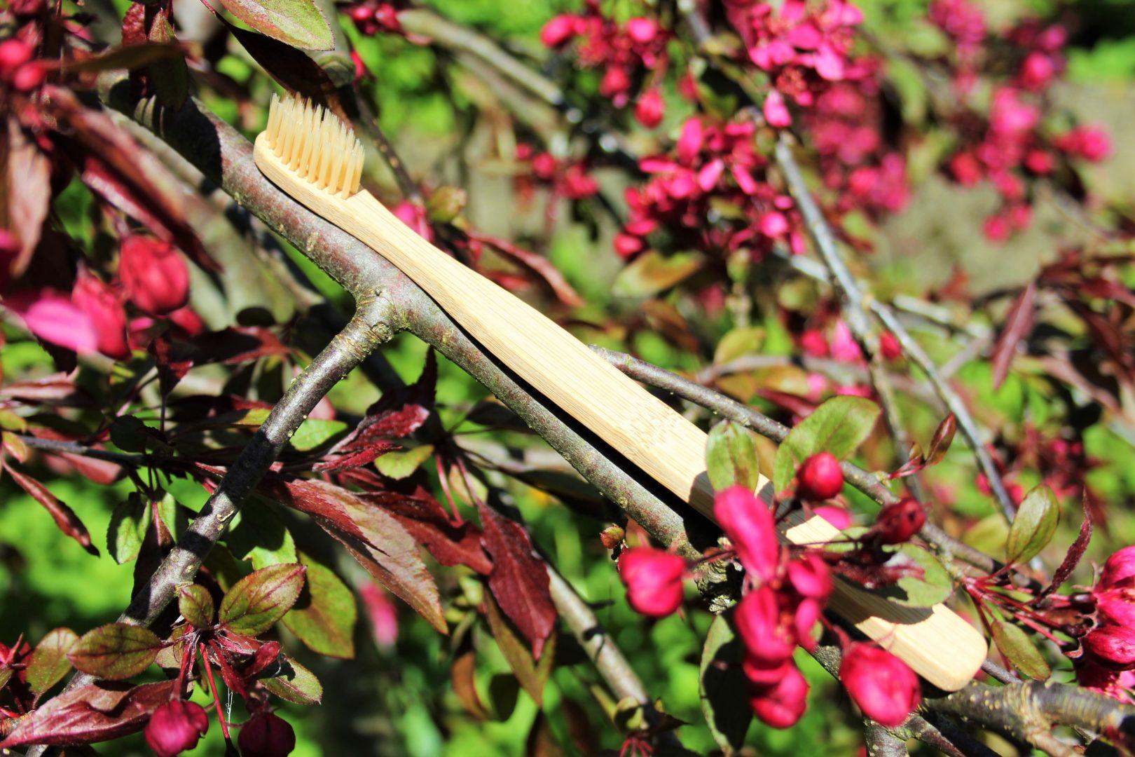 Bambus Zahnbürste von baumfrei in der Natur