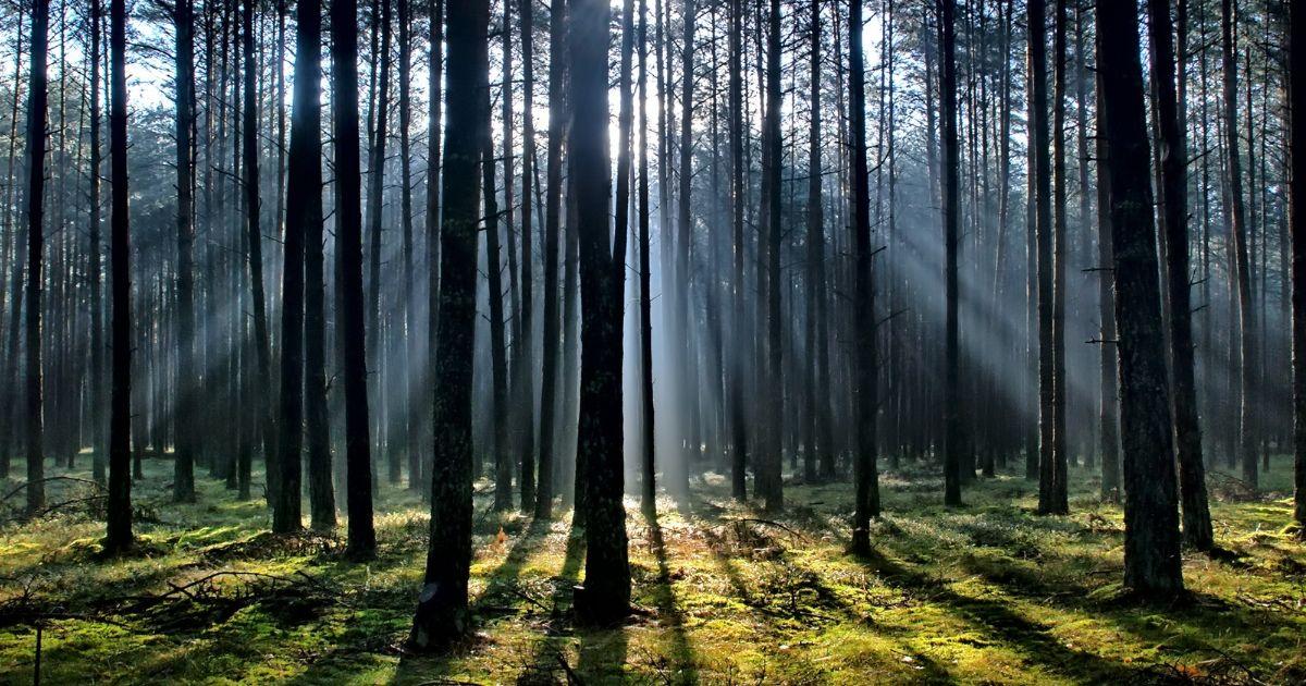 baumfrei - Bäume pflanzen